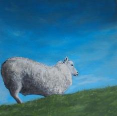 Texelschaap (verkocht)